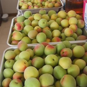 梅の仕込と保存食