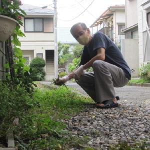 玄関前の雑草を整備。