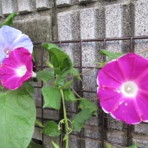 夏の名残を伝える花々。