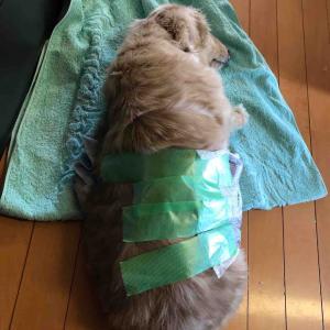 老犬介護スタート