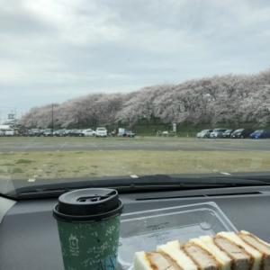幸手権現堂の桜