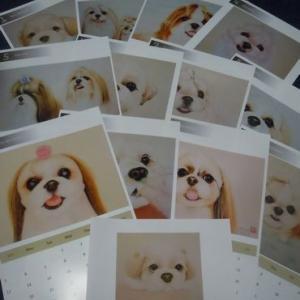 シーちゃんの似顔絵カレンダー