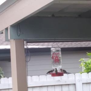 裏庭は鳥たちのパラダイス