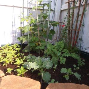 我が家の家庭菜園