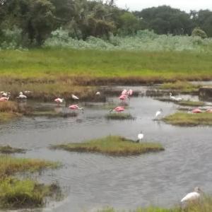 メキシコ湾に生息する美しい鳥たち