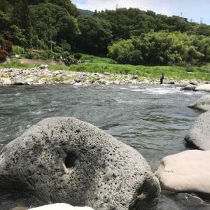 桂川で鮎釣りでした