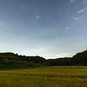 熊谷の大エノキと星空