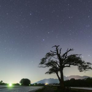 野辺山・やまなしの木と星空