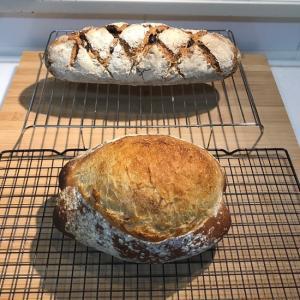 グルテンの網目を確認したパンがどうなったか??