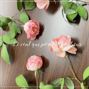 淡いピンクのバラ・シャンスポム