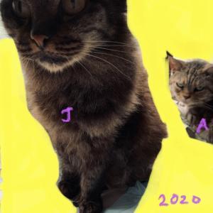 かなり久々に撮影した愛猫1