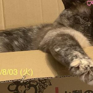 TikTok___保護猫が回=E5=BE=A9?=