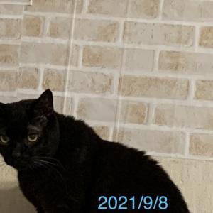 黒猫myくんがやってきたー