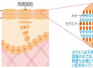 オリーブオイルで美肌:オリーブオイルが肌に作用するメカニズム