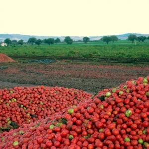 トマトのリコピンの健康効果をまとめてみました