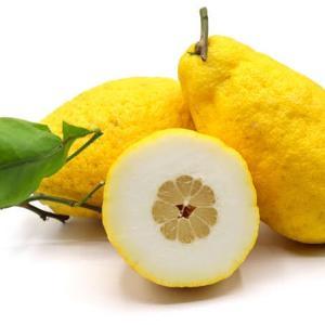 カラブリア州の珍しい柑橘Cedro(チェードロ)