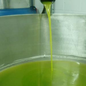 【告知】バランカ新油「搾りたて」8月末〜9月初旬に予約開始します!