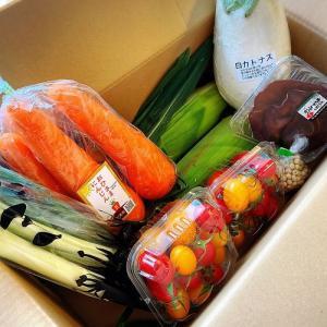 夢農人とよた地元限定野菜便を使って料理!