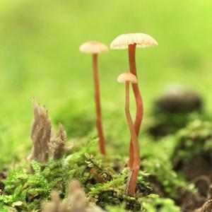 雨の森 きのこ森
