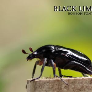 限定カラー ブラック登場