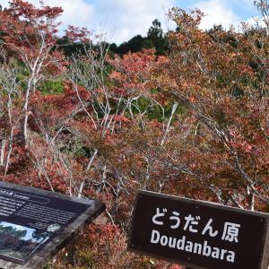 ★千葉山のハイキングコースの途中に広がるどうだん原の紅葉
