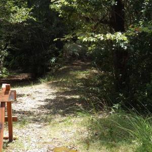 ★小笠山・小笠池周辺コースを歩いて山野草~イワタバコ