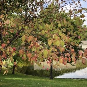 ちいさい秋みつけました
