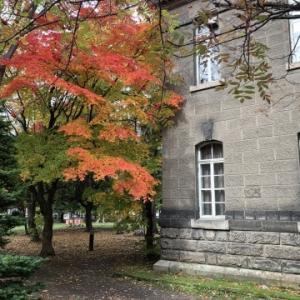 秋まっ盛り