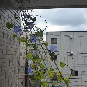 開花のピーク