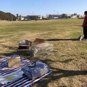 2019年11月・白井総合公園うさんぽ☆まさむね初うさんぽデビュー!