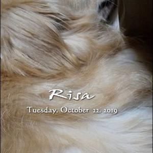 リサ右肩しこり除去手術、ポッチは肛門嚢破裂( ゚∀゚; )タラー