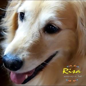 リサちん左耳マラセチア。インコの二代目ピーちゃん