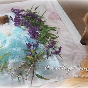 マイガーデンのお花でマリーを飾る・゚☆・゚