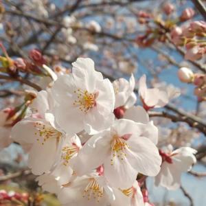 新型コロナ不安と日本人の良心