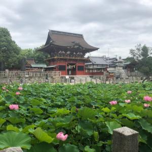 7月の夏着物deかき氷  伊賀八幡宮の蓮の花