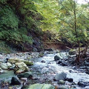 落ち葉と渓魚