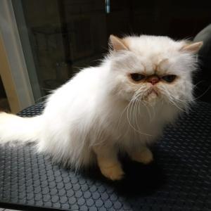 名古屋市名駅南の犬猫美容室POPS 初回犬猫美容料金