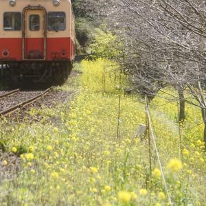 幸せの黄色い絨毯。的なほのぼのローカル線。