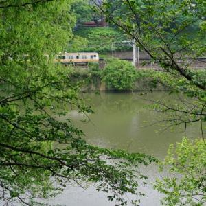 堀の緑の濁り水、市谷界隈。道草Z900RScafe2