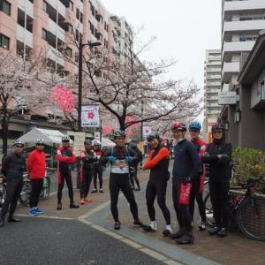 いま、桜が綺麗なライトサイクルより、皆様へのお願い