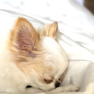 タヌキ寝入り