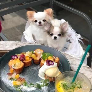 花かんむりのフレンチトースト