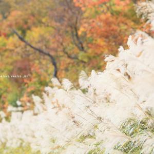 飯山市 なべくら高原の秋