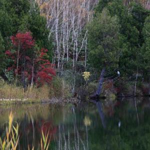 志賀高原の紅葉 木戸池にて