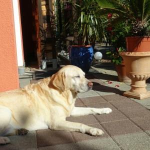日向ぼっこ & 椎間板ヘルニアの親戚犬