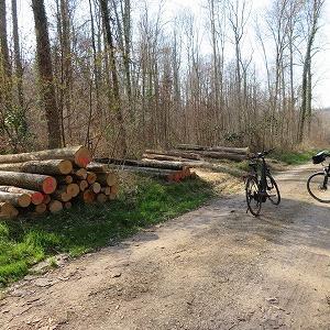 日曜日のサイクリング