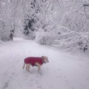 ちょっと不思議な雪だるま