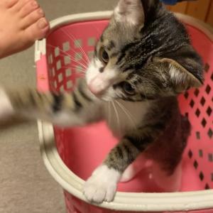 猫って箱とかに入るのすきだよね〜〜