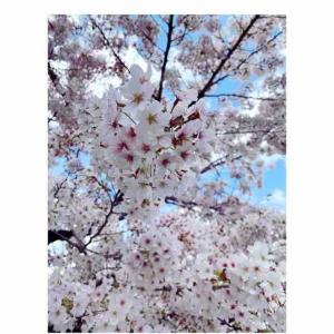 桜も美しいけど