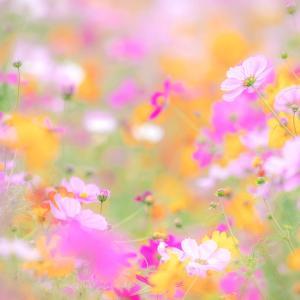 秘密の花園(再現像)